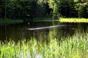 oxygénation étang, Aération des pièces d'eau