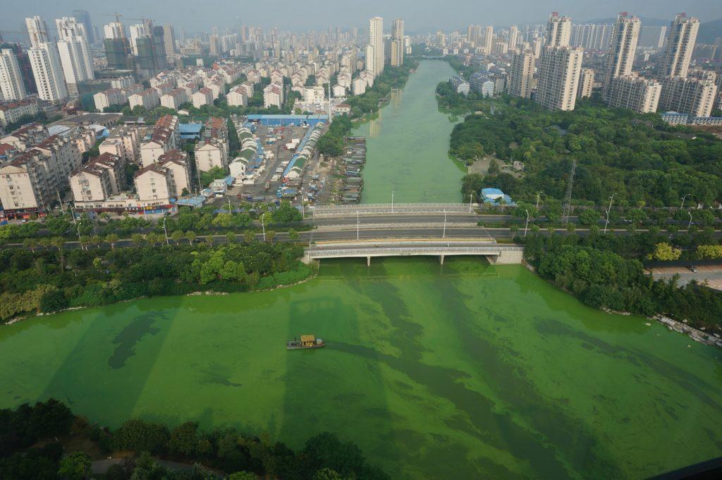 eau-cyanobactéries